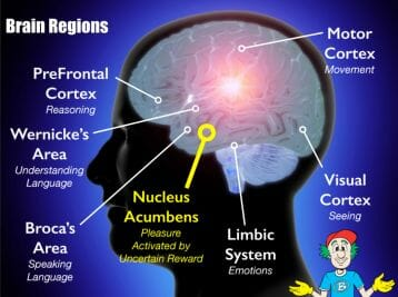 Uncertain reward whole brain teaching deep within the limbic system secrets dopamine the brains pleasure chemical when we engage in enjoyable activities playing games eating ccuart Gallery